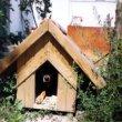 Kutya ház építése – 7 fontos dolog amire figyelnünk kel