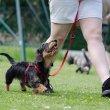 Mikor van szükségünk kutyakiképzésre?