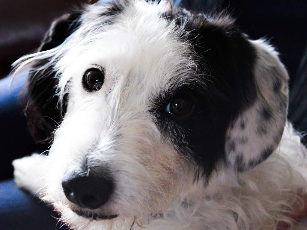 Kutya jog - felelős kutyatartás