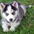 A kölyök kutyám remeg – mit tegyek?